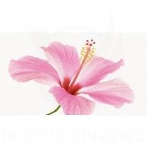 Hibiscus (CAP)