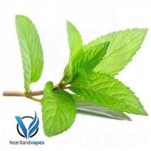 Menthol Liquid (TFA) e-Liquid Flavoring