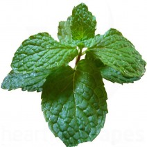 Mint (HS) Flavoring for DIY e-Liquid