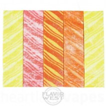 Rainbow Lined Gum (FW)