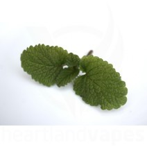 Wintergreen eLiquid
